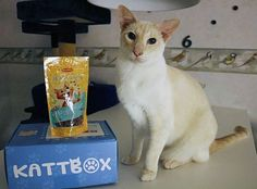 "Phoenix loves the "" Happy Snax "" with chicken  from #Bilanx who came in the catbox from @kattbox_se  Id :180  #kattbox #180miniophoenix #bilanx #Majskattbox  Källa: https://www.instagram.com/p/BGDOo07IkHq/"