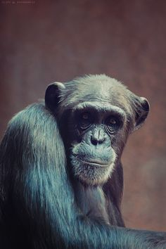 500px / Monkey by Cliff Warthold