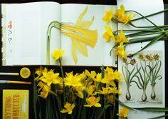 My yellow floral inspiration~ #Narcissus #daffodils