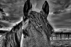 Grey Horse and Storm. One of my favorites! Hope you like it too.
