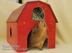 Cali Cavy Collective: a blog about all things guinea pig: Wooden guinea pig barn house