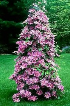 Learn how to grow and care for clematis flowers. Prune and deadhead perennial clematis plants guide. #clematis #climbingplants #perennials #plants Clematis Plants, Clematis Flower, Clematis Vine, Garden Plants, Fruit Garden, House Plants, Outdoor Flowers, Outdoor Plants, Wisteria How To Grow