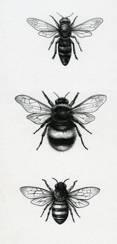 Lisa alderson - la - bees tattoo insect tattoo, bee tattoo и Kunst Tattoos, Tattoo Drawings, Leg Tattoos, Small Tattoos, Tatoos, Petit Tattoo, Tattoo Zeichnungen, Bee Art, Nature Illustration