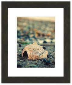 """11"""" x 14"""" Traditional Photography Prints / Wall Décor Nature Photograph: Shell at Bowers Beach. View all of the stunning Nature Photos by Landscape and Nature Photographer Melissa Fague at:  https://www.etsy.com/shop/PIPAFineart Limited edition fine art nature photography prints and canvas wraps are also available in a variety of sizes."""