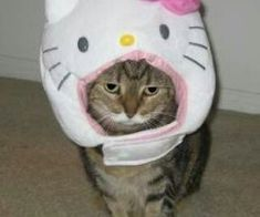 Caturday: Cats with hats! Doja Cat, Cat Hat, Hello Kitty Cat, Baby Animals, Cute Animals, Gatos Cool, Cute Memes, Oui Oui, Indie Kids
