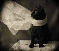 Black Cat - Opus 2