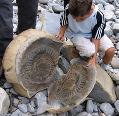 It's an ammonite fossil - the concretion forms around the ammonite and the concretions are usually found in clay or shaley rocks.