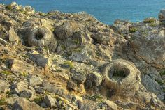 Dorest Fossil Forest on the Isle of Purbeck in Dorset, England. These are molds of Jurassic gymnosperms (early coniferous trees) which died after being encased in sediment. Dorset Coast, Dorset England, Conifer Trees, Jurassic Coast, London United Kingdom, Geology, Earth, Nature, Travel