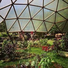 Geodesic greenhouse herb garden! Photo by Amanda Sage