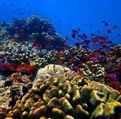 Scuba diving at the Great Barrier Reef.  Mergulho na Grande Barreira de Corais  Australiana. É surreal ver essa explosão de vida de cores de biodiversidade. É surreal você começar um ano sem saber a quantidade de sonhos que você realizaria a quantidade de bênçãos e coisas boas que viriam. Fico com a beleza e a lembrança das lágrimas subaquáticas que saiam enquanto realizava este.  #throwbackaustralia #australia #queensland #backpacking #travel #viagem #world #igers #igersaustralia…