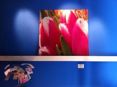 Barbara Di Cretico Studio   wall in blue