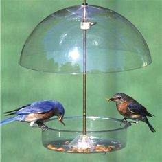 Seed Saver Dome Blue.  Birds that use this feeder: Bluebirds, Catbirds, Chickadees, Jays, Mockingbirds, Nuthatches, Orioles, Titmice and Woodpeckers.  #birdfeeder #video #birdwatching #birdseed #mealworms #fruitfeeder