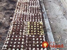 Kto raz skúsil, čo dokážu s úrodou a kvetmi, ten ich už nikdy nevyhodí do koša: Záhradkári, tieto triky s kartónmi od vajec vás dostanú!
