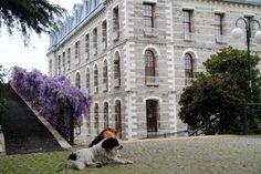 Bogazici University Hamlin Hall, Istanbul, Turkey