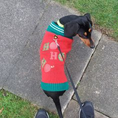 Since its #christmasjumperday and #LocalCharitiesDay do you like my sweater? @DogsTrust its my first Christmas this year with my new hoomans