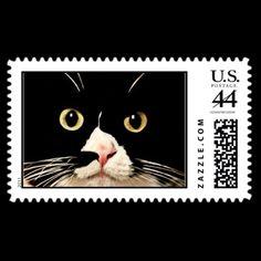 baby kitty cat u.s. postage stamp