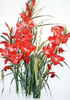 Charles Demuth - Gladiolus (1928)