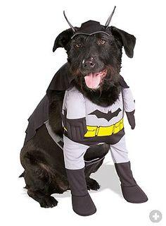 Batman. #hunde #dogsplaces