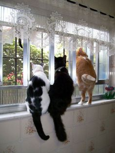 Nosey kitties...