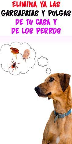 310 Ideas De Cosas Para Perros Cosas Para Perros Perros Casas Para Perros