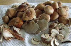 Soup from Scratch: Wild Mushroom - Town & Country Living