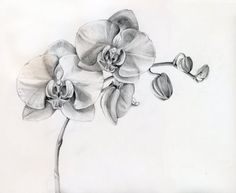 Floral Pencil Drawings - Fine Art Blogger