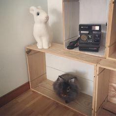 #bunnyandifriend #lionhead #polaroid #rabbitlamp