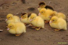 https://twitter.com/nore5pc/lists/duck
