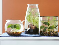Assemble a simple indoor water garden in a splash! Use a glass container, lush greenery and decorative accents to create an easy-to-maintain plant scene that will add a charming natural accent to your home décor or table centerpieces.