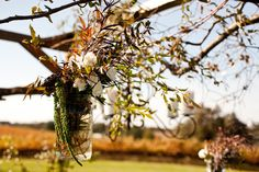 inspiration....Vineyard wedding    http://www.coopervineyards.com/cmd.php?ad=600539