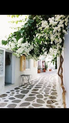 White bougainvillea at Paros island, Cyclades, Greece Places Around The World, Oh The Places You'll Go, Places To Travel, Places To Visit, Around The Worlds, Travel Destinations, Travel Deals, Paros Greece, Athens Greece