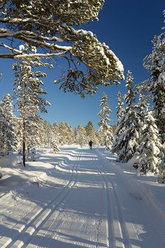 Cross-country skiing, Trondheim, Norway.  Photo: Helena Normark, via Flickr