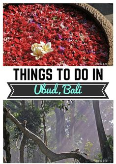 Temples, yoga retreats, and massages...Looking for things to do in Ubud, Bali? Check out the link to find out more!