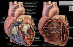 TCM Fórmula A Base de Hierbas para Curar la Enfermedad Cardíaca Reumática