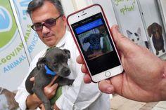 Pet finder app uses facial recognition technology