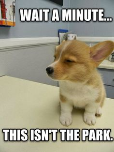 cute dolphins with captions 30 Funny animal captions part 18 30 pics funny high puppy meme Animal Captions, Cute Animal Memes, Funny Animal Quotes, Animal Jokes, Cute Funny Animals, Funny Quotes, Funny Animals With Captions, Funny Pics Of Dogs, Funny Dog Captions
