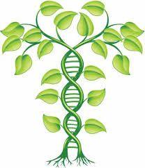 Biotecnologia Verde Dibujos Buscar Con Google Dna Art Dna Research Dna