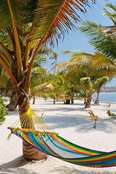 Globetrotters: Charlotte Shares All. — Franki Durbin - On an island in Belize. More than 200 offshore islands dot Belize's Caribbean coastline, ranging - Dream Vacations, Vacation Spots, Romantic Vacations, Italy Vacation, Romantic Travel, Places To Travel, Places To Go, Paradis Tropical, Trinidad E Tobago