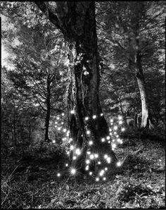 Tokihiro Sato, Shirakami #2   /  Lightening bugs lighting up!  Wow ... neat!  (: