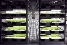 World's first robot-run farm to churn out 11 million heads of lettuce per year