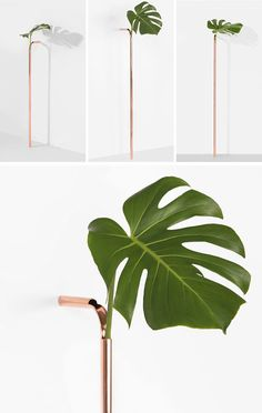Sao Paulo based designer Guilherme Wentz has created the Solo Vase, a minimalist copper vase that brings nature into the home in a delicate and unconventional way. #Decor #Vase #Copper #Minimalist