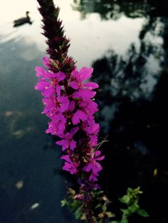 My Photos, Plants, Photography, Fotografia, Fotografie, Photo Shoot, Planters, Plant, Photograph