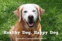 Healthy Dog, Happy Dog #GetHealthyHappy