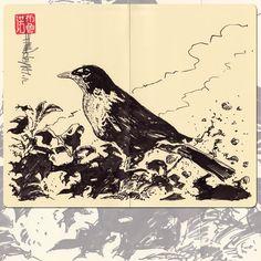 Robin bird, 2012. Black ink on Moleskine paper A4 / Encre de chine sur papier Moleskine A4.