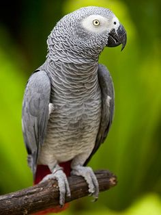 Parrot Missing for 4 Years Returns Speaking Spanish http://www.peoplepets.com/people/pets/article/0,,20861848,00.html
