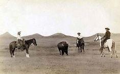 Cowboys, roping a buffalo on the plains, 1887