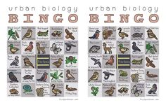 Urban Biology Bingo: class trip outside, learn animal names, use magnets/re-usable stickies/laminate and markers for class