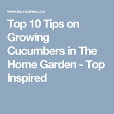 Top 10 Tips on Growing Cucumbers in The Home Garden - Top Inspired