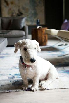 Kinda looks like a white version of my dog Buddy