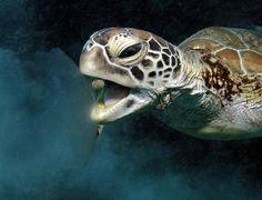 Paisagens Oceânicas : Discovery Channel